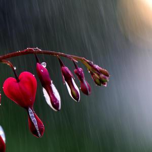 Спецэффекты. Дождь и диклитра