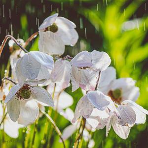 Как приятно жарким летом окунуться в дождь такой