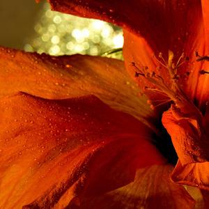 Ликует, буйствует планета, пришло оранжевое лето!