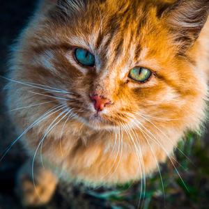 На что похожа осень? На рыжего кота… Он как листок оранжевый – от ушек до хвоста И лишь глаза зелёные, наверно потому, что летом котик прятался в высокую траву