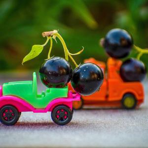 Черную смородину собираю ведрами, увожу грузовиками, урожай делю с друзьями
