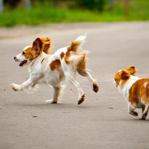 Если любишь ты собаку,  но с ней некогда гулять, заведи себе вторую - не придётся ей скучать