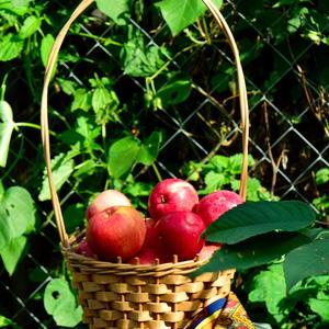 В корзинах фрукты вносят в дом, когда проходит лето, и оставляют под дождем за дверью сад раздетый