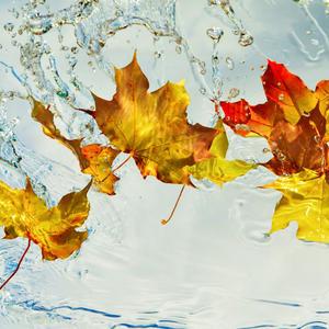 Брызгами рыжие листья, небо - бело-синее блюдо. Осень-авангардистка пишет свои этюды