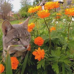 Огоньки цветут в саду