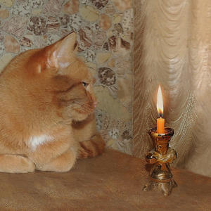 Магия свечи и кота заворожила