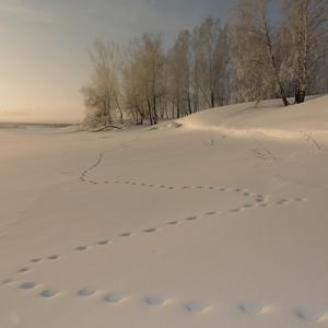 По зимнему озеру чья-то змейка следов