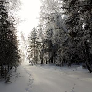 Лесные следы
