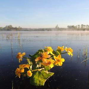 Ранним утром на озере
