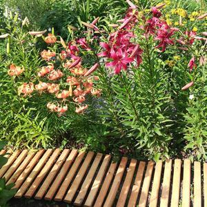 Моя полутораметровая садовая дорожка - где красиво, туда и переношу :)