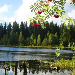 Пейзаж с рябиной и глубоким озером!