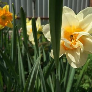 Радость весны!!!