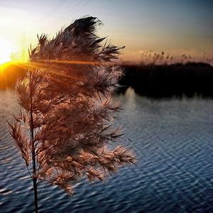 Луч солнца золотого, октябрьского