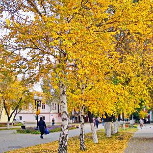 Осень выкрасила город колдовским каким-то светом....