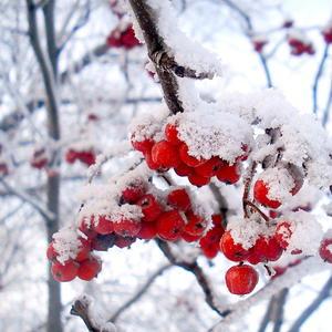 Красивый зимний сюрприз