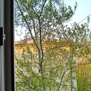 Майский тополь за окном