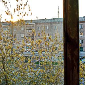 3 мая... вечер... клён за окном