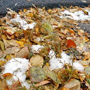 Осенний ковёр