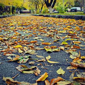 На ковре из жёлтых листьев....