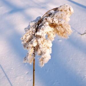 Зимняя шубка