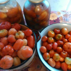 Собрала помидоры для консервирования. Завтра обязательно поделюсь рецептом