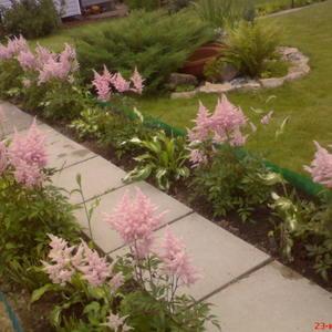 Центральная дорожка моего сада