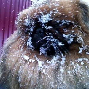 Люблю дачу даже в лютый мороз.