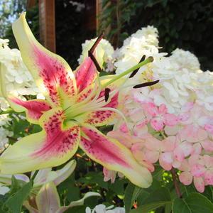 Цветы перед домом