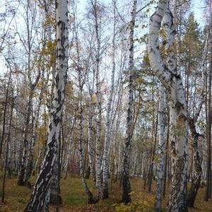 Чудный осенний лес