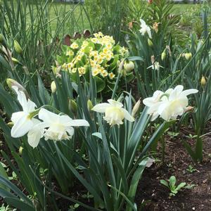 Весна в цветнике