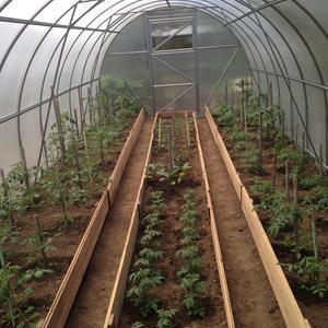 Дом для томатов