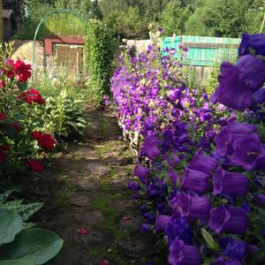 И садовая тропинка, и проход вдоль летних колокольчиков