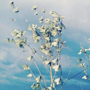 Бабочки-цветочки) Случайный кадр