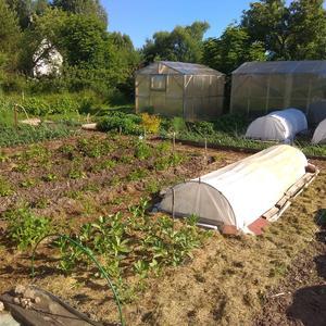Мой новый огород