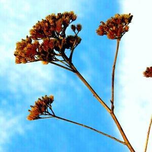 Февральский цветок