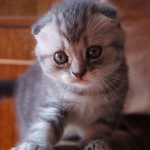 Поиграйте со мной! Пожалуйста!
