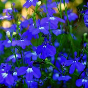 Голубее голубого, а на дворе ноябрь