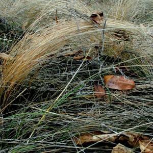 Осенняя прядь земли