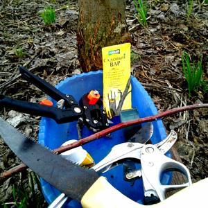 Первоочередные инструменты для сада