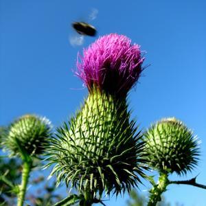 Самый колючий цветок