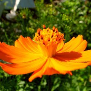 Оранжевое НЛО
