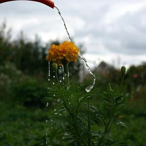 Радость для цветка - живая вода