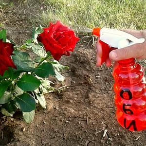 ОБИ помогает в уходе за розами