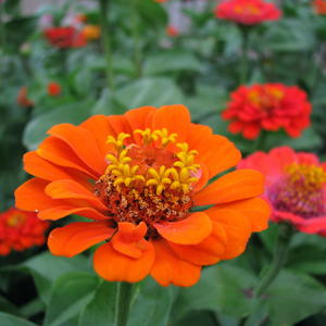 Оранжево цвету...