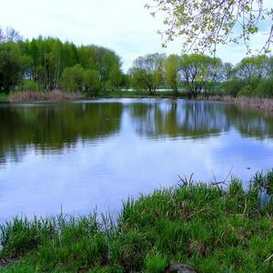 Майский день у озера 1