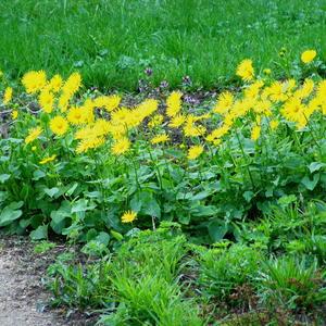 Весенние цветы 4