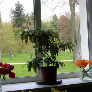 Весна. Вид из окна