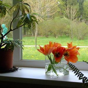 Вид из окна 1. Весна