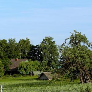 Деревенский пейзаж 1