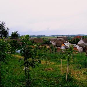 Лето в деревне 1
